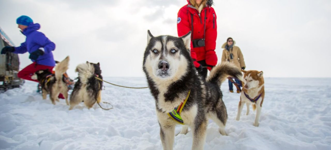 Baikal husky in the snow smiling woman