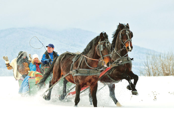 Horses sleds running in the snow