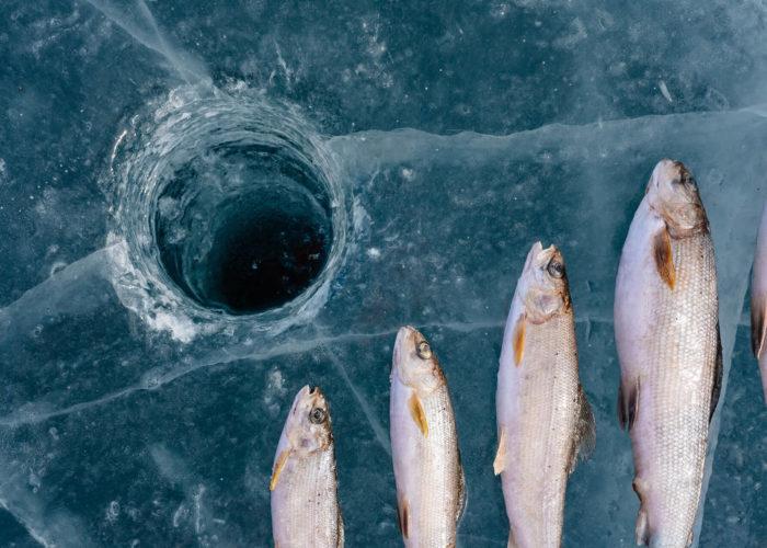 Baikal ice fishing tour omul fish