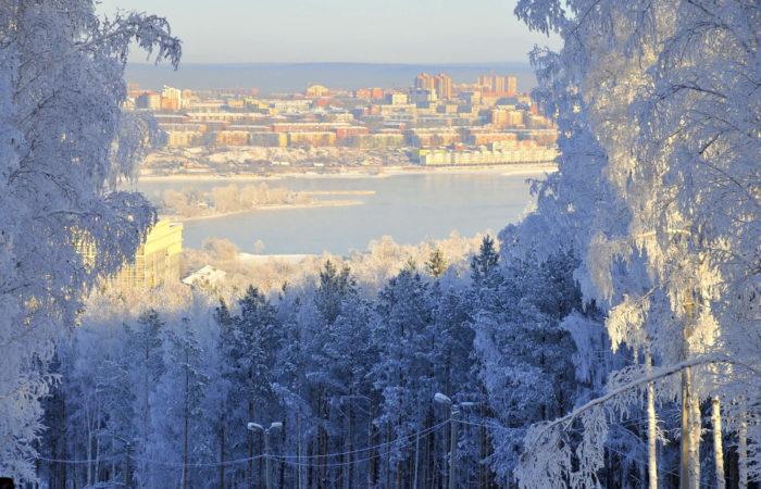 Snowy trees winter window Irkutsk view